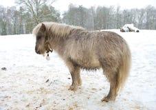 Pony in snow Stock Image