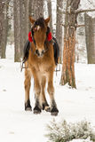 Pony on snow Stock Images