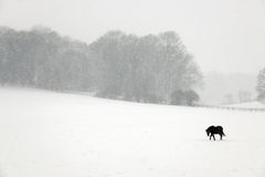 Pony in the snow Stock Images