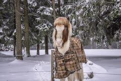 Pony in snow weather Stock Photos