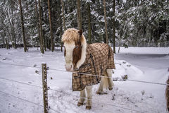 Pony in snow weather Stock Images