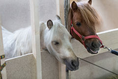 Pony Standing In The Stable Royalty Free Stock Photography