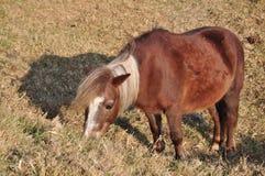 Pony at Taichung Royalty Free Stock Image