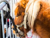 Pony tied to a fence in the street. Royalty Free Stock Photo