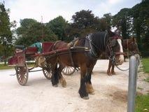 Pony and Trap Royalty Free Stock Photos