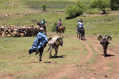 Pony trekking in Lesotho near Semonkong. Stock Photo