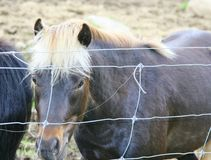 Pony with white mane standing by a wire fence Royalty Free Stock Image
