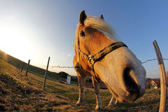 A pony in the worm's-eye view Stock Photo