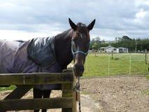 Pony am Zaun Lizenzfreie Stockfotos