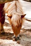 Ponykopf Lizenzfreie Stockfotos