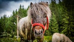 Ponylandschaft Stockbilder