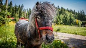 Ponylandschaft Stockfotografie