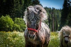 Ponylandschaft Lizenzfreie Stockbilder