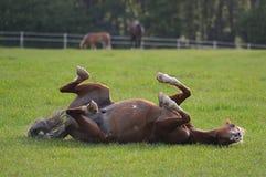 Ponyrollen auf seinem Gebiet Stockfoto