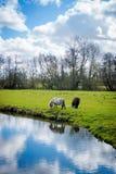 Ponys auf dem Gebiet am Bauernhof Stockbilder
