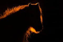 ponys wild welsh Royaltyfri Fotografi