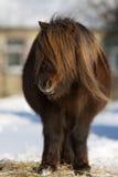 Ponystand in einem Yard stockfotografie