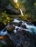Ponytail падает с листвой осени Стоковое Фото