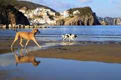 Ponza landscape view dog Royalty Free Stock Photography