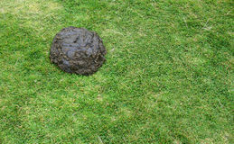 Poo on grass Royalty Free Stock Images