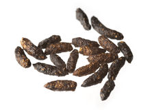 Poo pellets from mouse royalty free stock images