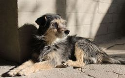 Pooch, binnenplaatshond stock foto's