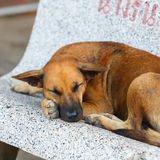 Pooch dog sleeps on bench on street Stock Images