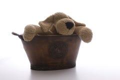 Pooch in een pot Stock Fotografie