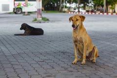 Pooch gele en zwarte honden die op tegel op straat zitten Stock Foto's