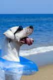 Pooch in Paradise Royalty Free Stock Photos