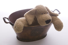 Pooch in a pot Royalty Free Stock Photography