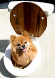 Pooch on the Pot Stock Photography