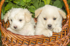 Pooch Stock Images