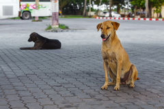 Pooch yellow and black dogs sitting on tile  on street Stock Photos