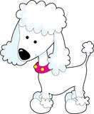 Poodle Stock Images
