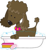 Poodle Bath Brown Royalty Free Stock Photo