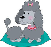 Poodle on a cushion Royalty Free Stock Images