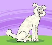 Poodle dog cartoon illustration Stock Photos