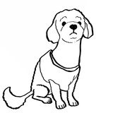 Poodle dog drawing Royalty Free Stock Photo