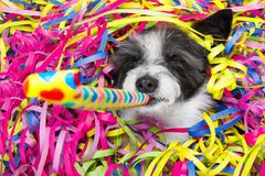 Happy new year dog celberation Royalty Free Stock Photo