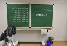 Sad little dog has detention at school. Poodle dog sadly sits in front of the blackboard in the school and tries to read. I try to be a good dog. He has royalty free stock images