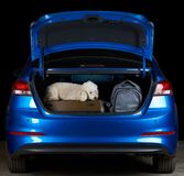 Poodle dog travel in car trunk. With luggage. Going to vacation with pet dog Royalty Free Stock Image