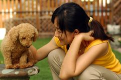 Poodle feeling sad. An asian lady try to comfort a sad looking poodle Royalty Free Stock Photography