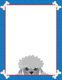 Poodle Frame Royalty Free Stock Images