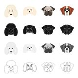 Poodle, molthesis, bulldog, and other web icon in cartoon style.Dog, animal, domestic, icons in set collection.