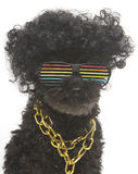 Poodle In Retro Rainbow Sunglasses Portrait Stock Photo