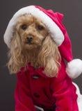 poodle santa Fotografering för Bildbyråer