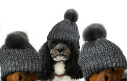 Poodle and teddy bears Stock Photos