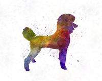 Poodle 01 in watercolor Royalty Free Stock Photos