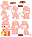 Poodles Vector Set Stock Image